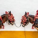 Mulas en la plaza de toros de Olivenza. Oto.