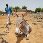 Paseos por Mali. Oto M.