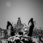 Romería de la Virgen de Botoa...reina de los campos extremeños. pkp