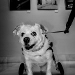 perry sobre ruedas. pkp