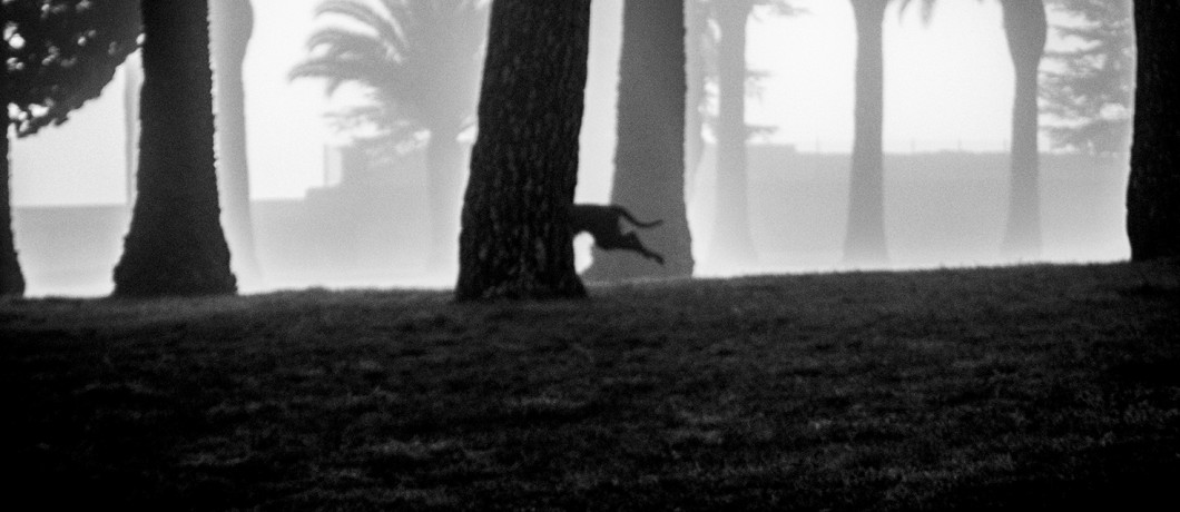 perro niebla. pkp