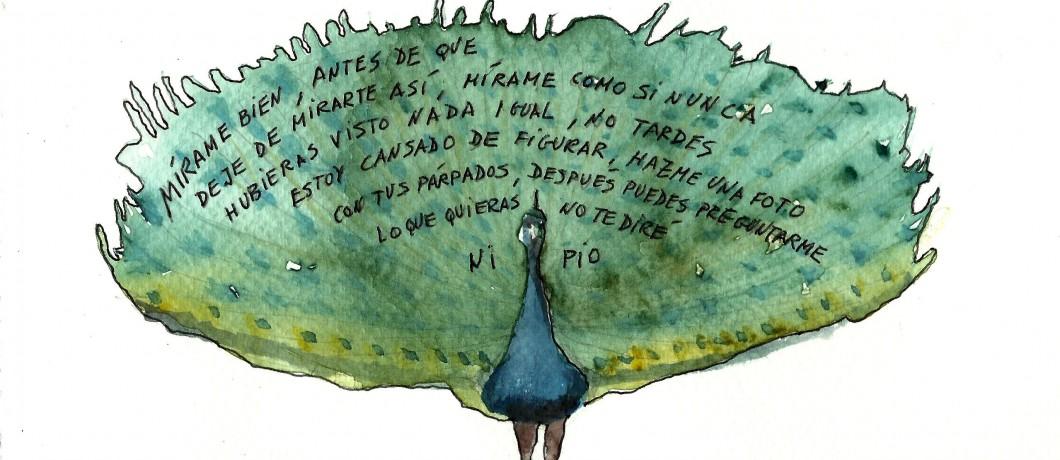 pavo-spanish-shame-culba01